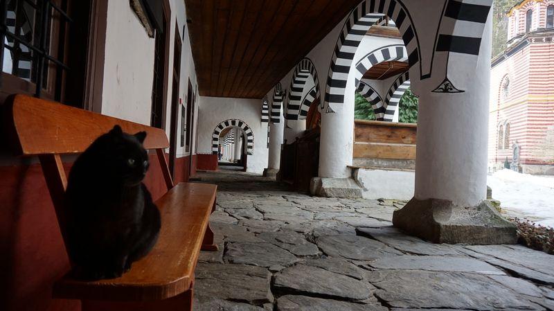 里拉修道院-貓咪