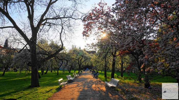 布拉格Prague必去景點-康帕島公園,很有當地人悠閒氛圍。