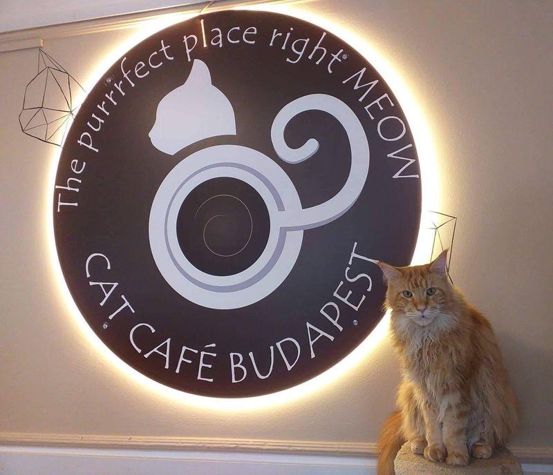 Cat Cafe Budapest 布達佩斯貓咪咖啡館