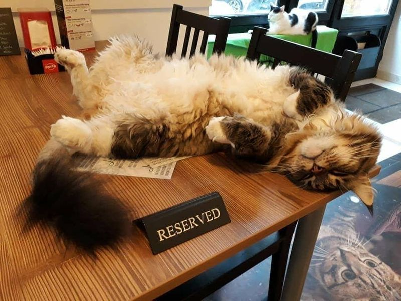 Cat Cafe Budapest 布達佩斯貓咪咖啡館,睡翻天千萬不要叫我起床。