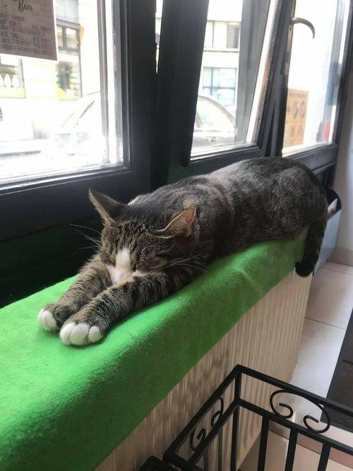 Cat Cafe Budapest 布達佩斯貓咪咖啡館,我伸懶腰也要跟你說嗎?