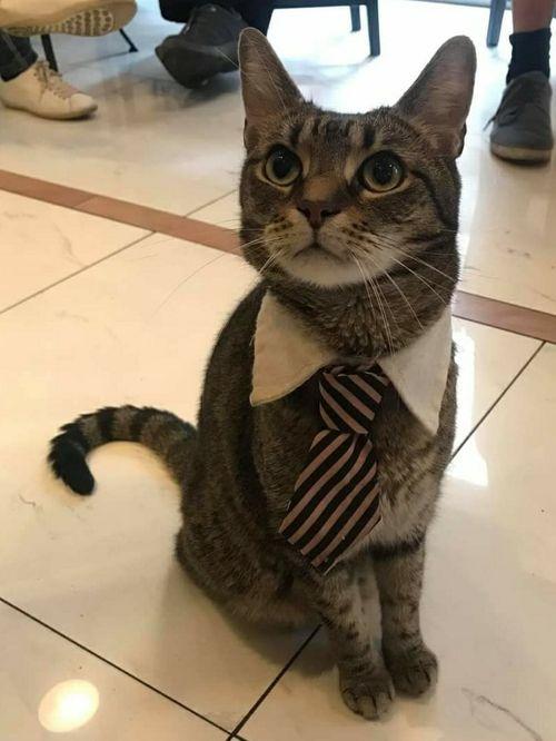 Cat Cafe Budapest 布達佩斯貓咪咖啡館,我是貓咪界經理,需要服務嗎?