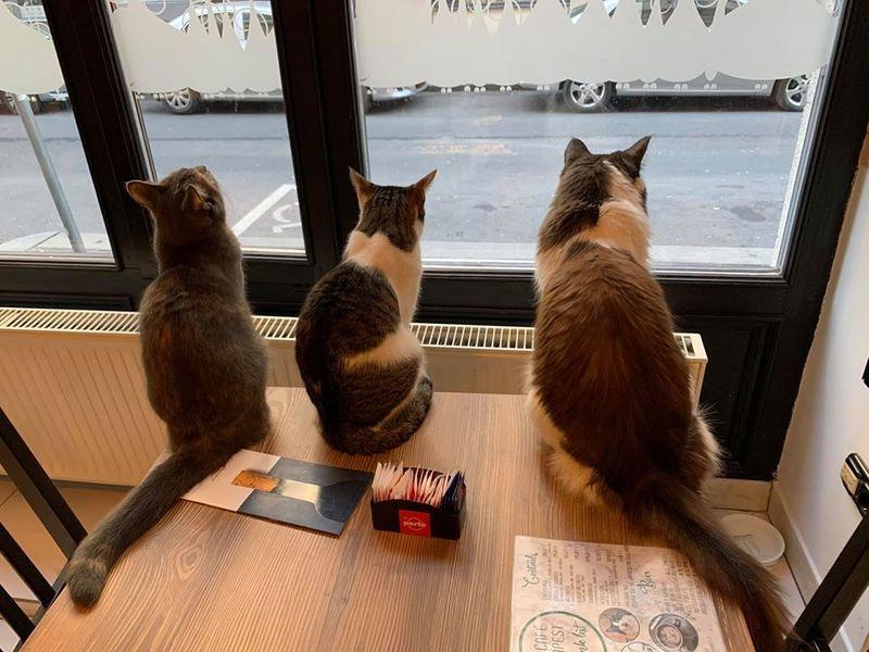 Cat Cafe Budapest 布達佩斯貓咪咖啡館,三人成虎看風景,但我們是貓不是虎。