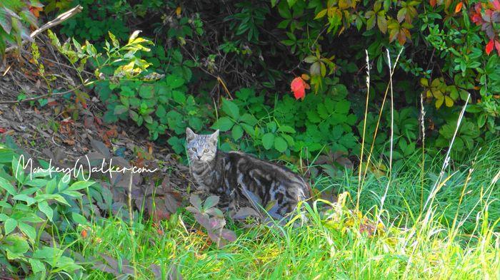 瓦茨的愾貓咪