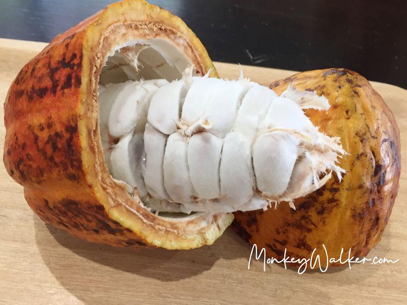 阿信巧克力農場台南店,店員會介紹可可果實。